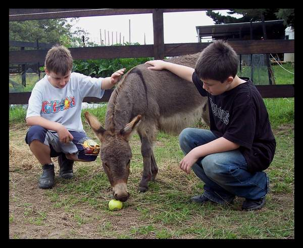 kids with aminiature donkey