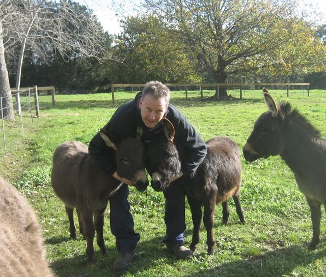 giving two miniature donkey foals a hug